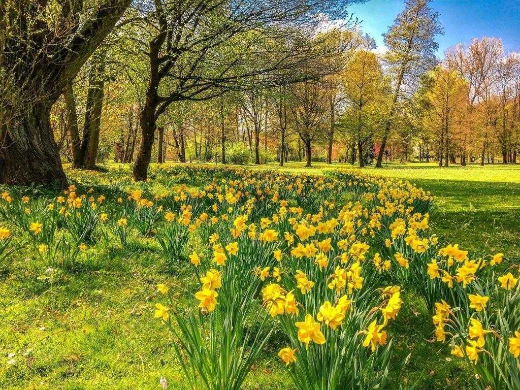 spring woodland scene